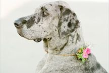 Four Legged Wedding Party Members / Not all important family members are human! For some, pets are just as important to include on the big day. Here are a few ways to incorporate your furry friends.