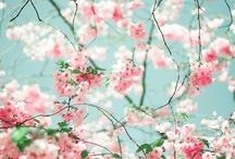 { photo : flower}