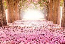 Garden and Patio / by Carla Springer