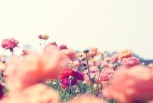 { photo : sweet }