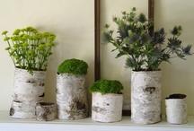 { green & plants }