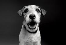 { photo : dog }