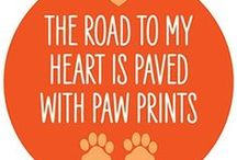 Pet Rescue & Adoption  / Pet adoption & rescue groups. Also, important pet info! / by Angie Gaffke
