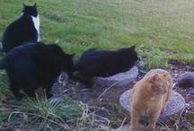 Our Feline Family / These are pics of our cats....  Katy, Alley, Rico, Tommy and Fiona. Not pictured (yet) are Ernie, Oskar, Stanley and their sister Darla. We have sweet memories of our Charlie Boy and Sylvester who will be forever missed! / by Angie Gaffke