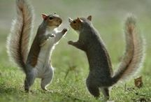 Those Squirrely Squirrels / Squirrel Love! / by Angie Gaffke