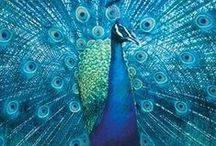 Peacocks / Oh so beautiful!! / by Angie Gaffke