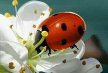 Buggin' Out / Even bugs are beautiful! / by Angie Gaffke
