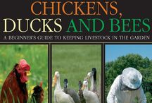 I am gonna get 3 chickens and 2 ducks. / Plans for my future chickens and ducks!