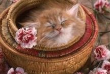 Meowers & Flowers / Cats and Flowers / by Angie Gaffke