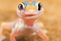Cool Critters / Cool frogs, toads, lizards, bats.... you name it!! / by Angie Gaffke