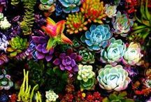 I love succulents and cacti