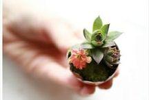 DIY / Things I want to make / by Heather Sadek
