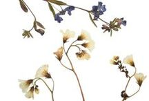 Botanical Illustrations / Floral Design