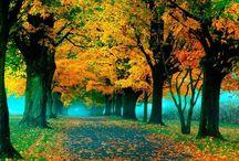 Autumn / My favorite season of the year!  / by Heather Sadek