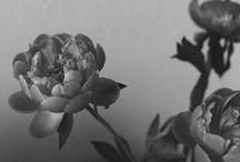 things / by Iris Foley