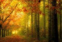 November Rain / Holiday - Autumn, Halloween & Thanksgiving / by Annette Holstine