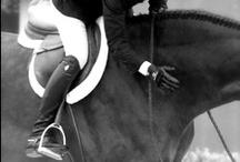 horses :) / by Melanie Silino