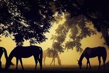 Eloquently Equine / by Teresa Goddard (Bosman)