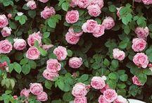 flower power. / by Sidney Coats