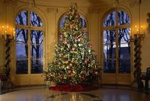"""***Christmas Trees*** / Add your favorite Christmas Tree and enjoy this beautiful time of the year .Please try not to pin non-related pins, because they will be deleted.                                  ~ If you wish to be added to the board, please let me know by commenting """"ADD ME"""" on any of my pins  ~ You may invite other pinners as long as board rules are followed. Enjoy pinning !"""