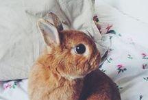 Rabbits. Bunnies.