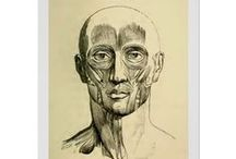 Vintage Anatomy / Posters and prints featuring vintage anatomical illustrations. / by monica kay