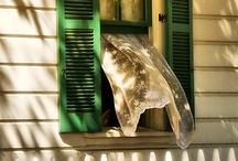 Zéfiro / (...) Zéfiro é também considerado uma brisa suave ou vento agradável, pois era o mais suave de todos os ventos tido por benfazejo, frutificante e mensageiro da Primavera.