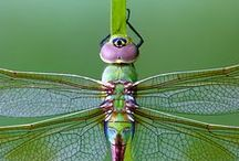 Dragonflies / by Ellen Anne Eddy