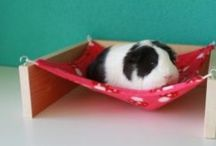 Guinea Piggies / A collection of images and ideas pertaining to guinea pigs; tinkering with building a new cage atm