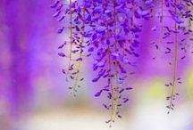 Inspire - Liliac & Violet / by annamelie