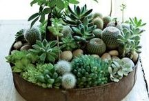 DIY T e r r a r i u m s  / lots of projects to make a terrarium or a mini fairy garden..and inspiration to decorate with them / by **S a b i n e l **