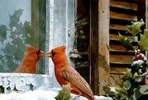 Red Birds <3