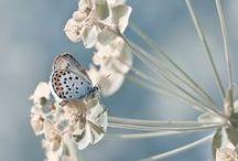 Celebrate - Spring / by annamelie