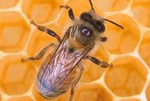 Beekeeping and Honey