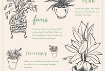 grow / by Alli Rense