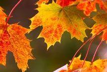 Autumn Thyme