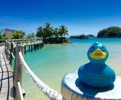 Tommy's Travels / Follow our loyal travel companion Tommy the Turquoise Duck on his journey around the world...