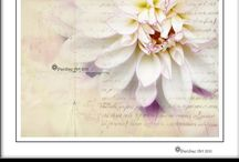 Designed2Bless / Ideas for using Scripture on cards & inspiration to bless  - Designed2Bless / by Jill Parker