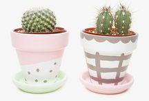 ℳeℒ's €a€tus 0bsᏋssiøn / Cacti love
