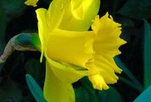 Flowers / by Judy Fuller