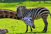 Animals / by Terri Richards