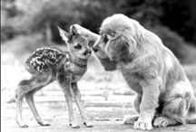 animal pals / by Madison H