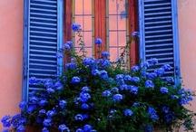 Window boxes / by Diane J. Davis