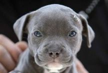 for . . . the love of pitties