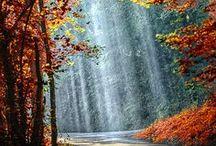 Autumn / by Diane J. Davis
