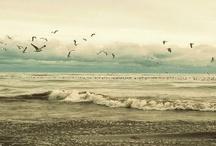 Sea & Sand / by Julia Smith