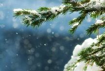 Winter / by Diane J. Davis