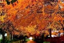 Fall Beauty  / All things good happen in the fall. The leaves changing, the smell, the excitement and most of all decor.