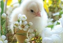 Easter / by Diane J. Davis