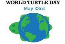 World Turtle Day / Shell-ebrate World Turtle Day with Nûby USA! / by Nûby USA